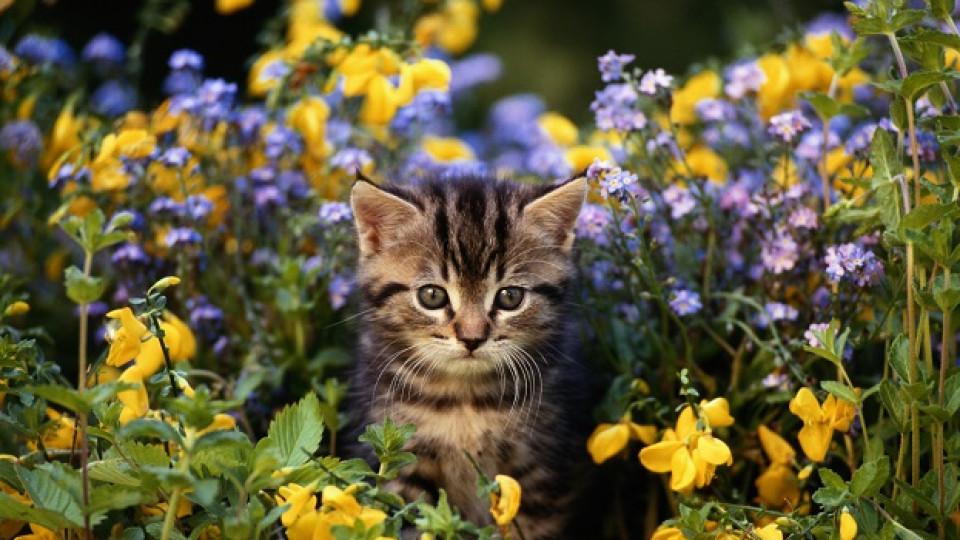 Щастието е аромат, приятели и пухкаво котенце