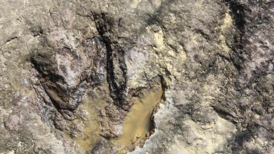 Откриха пътека на динозаври на 100 млн. години