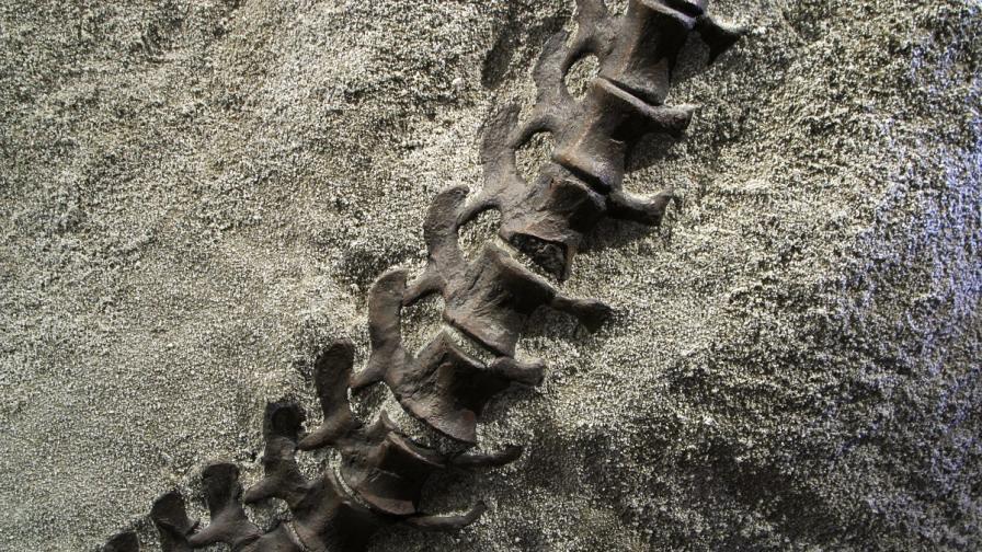 Откриха фосили от странен динозавър