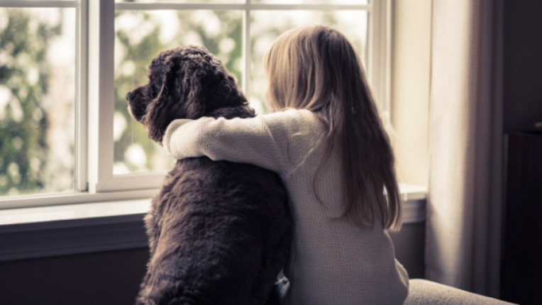 куче коте дете домашен любимец