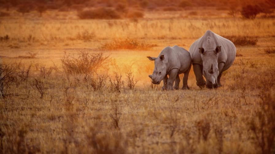 """""""Летящите"""" носорози на Ботсвана"""
