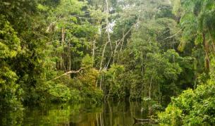 Глобалният катаклизъм, довел до появата на Амазония