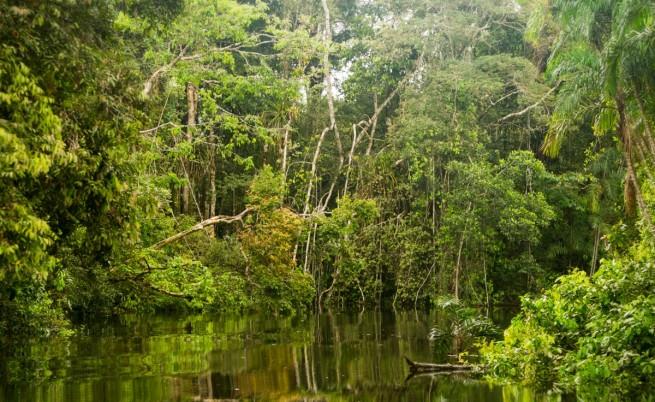 Златото победи разума, Бразилия пуска минните компании в Амазония