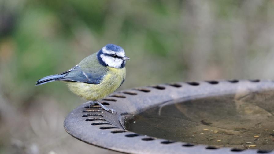 Тази неделя: В търсене на птици в Южния парк