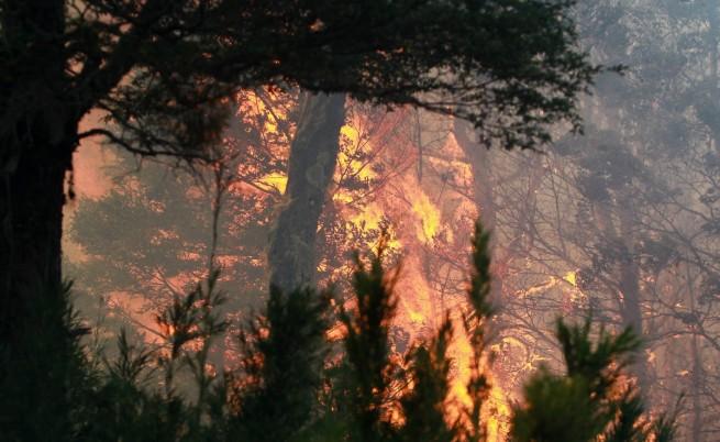Огромен горски пожар вече седмица бушува в Канада