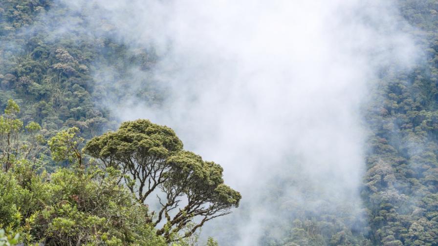 Еквадорска гора