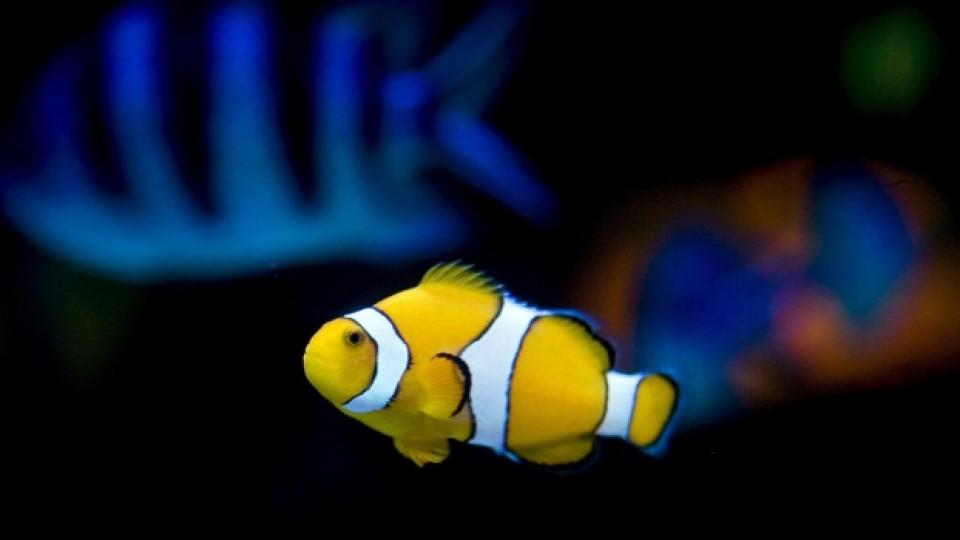 Сменяйте около 15-20% от водата на аквариума всяка седмица