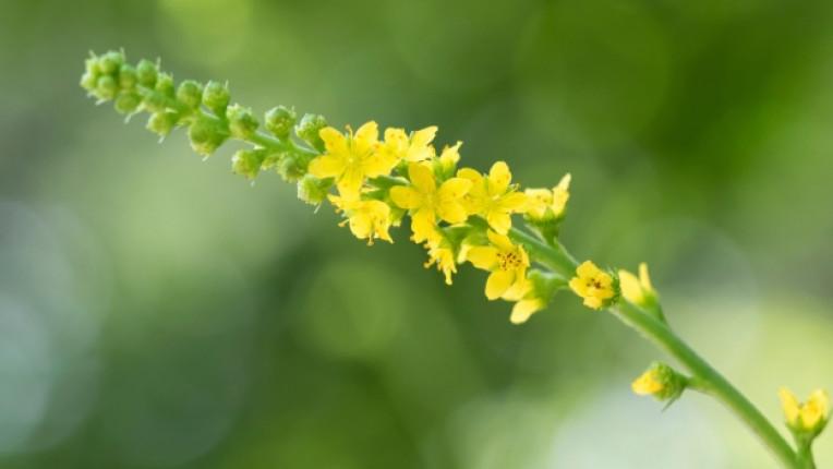 цветя бах