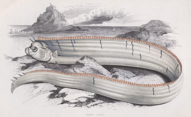 Океанът изхвърли мистериозна риба-гребло в САЩ