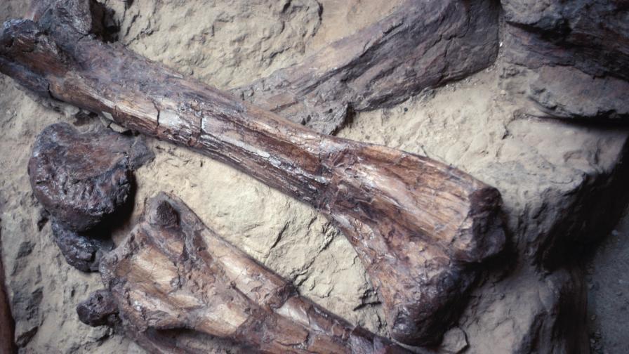 Учени кръстиха екзотичен динозавър Хелбой (видео)