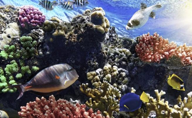 Изкуствени облаци може да спасят кораловите рифове
