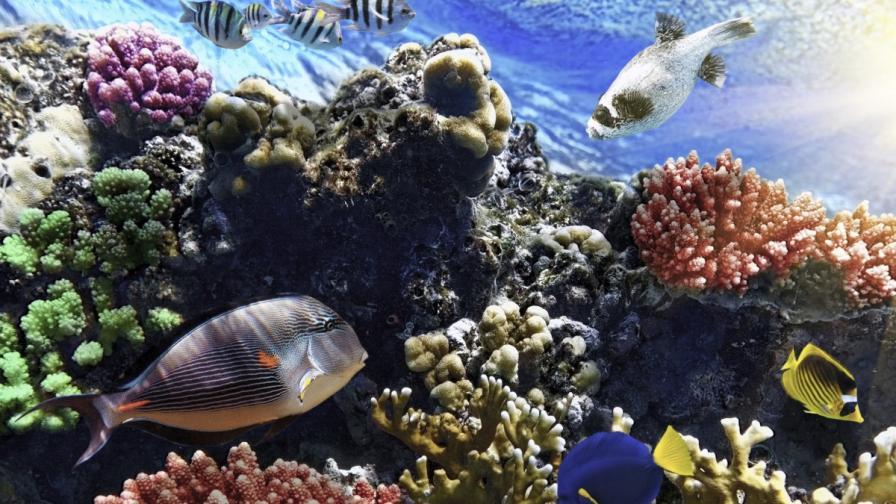Големият бариерен риф се обезличава необратимо