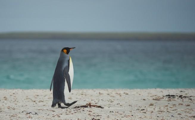 Шарлот – пингвинът, който се страхува от водата