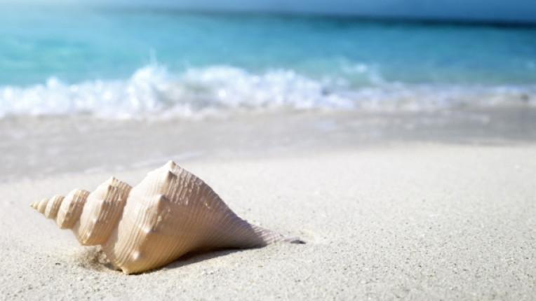 море мида