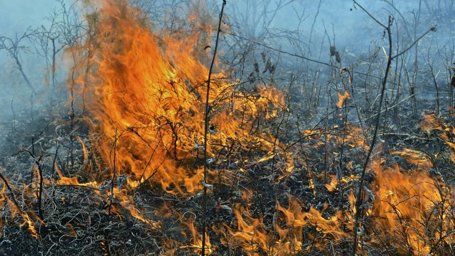 Два горски пожара бушуват в Тетевенско