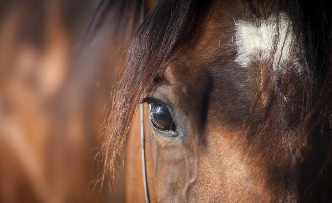 Арестуваха ездач за смъртта на 2-годишно дете в Сливен