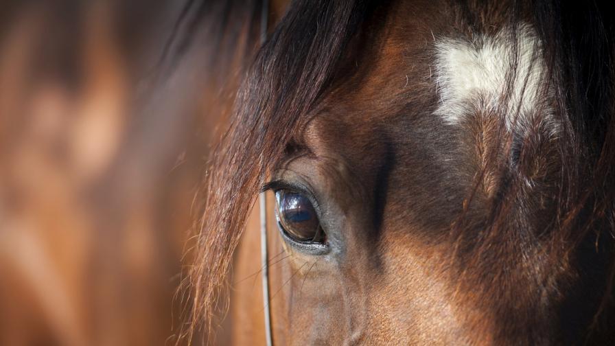И конете изразяват чувствата си с мимики