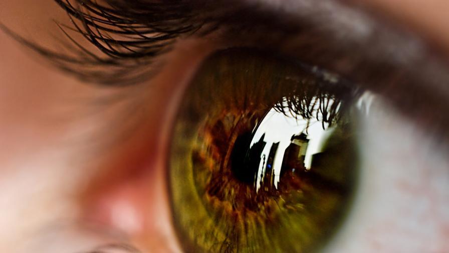 Окото възприема цветовете по различен начин през лятото и зимата
