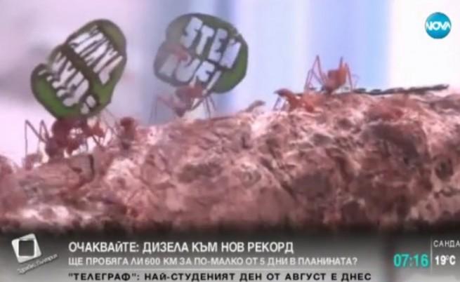 Мравки с малки плакати участваха в демонстрация