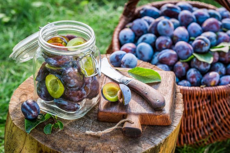 сливи слива плод плодове