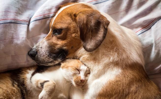 Историите с щастлив край на четири осиновени кучета