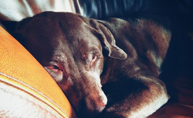 Кучето трудно ви познава - какво е обяснението