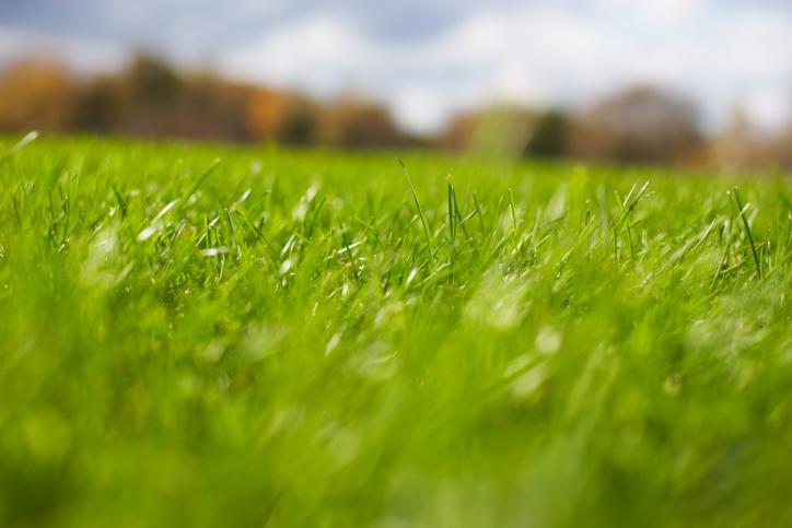 22. Ароматът на прясно окосена трева