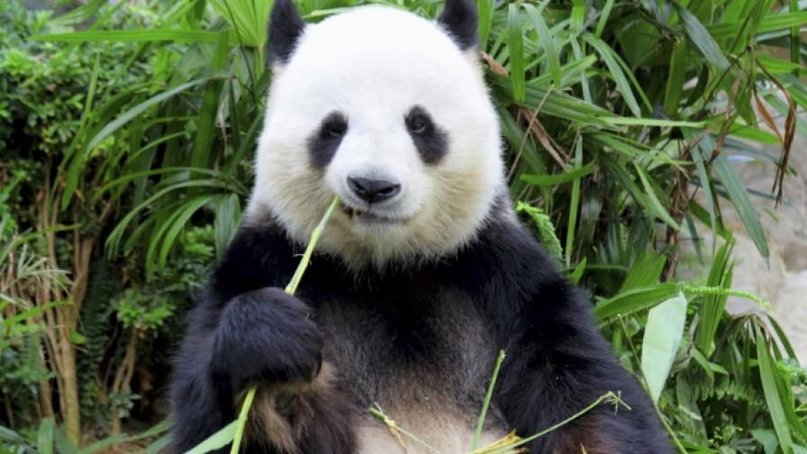 Две трети от дивите животни - изчезнали до 4 години