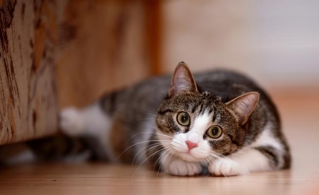 Снимки на котета в отговор на призива за