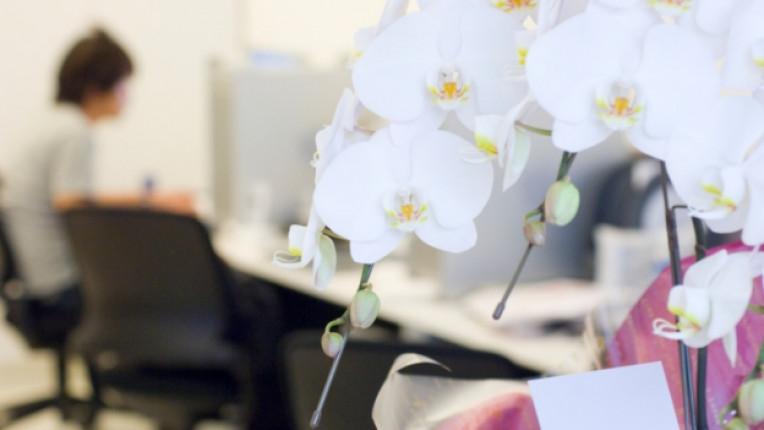 офис цветя