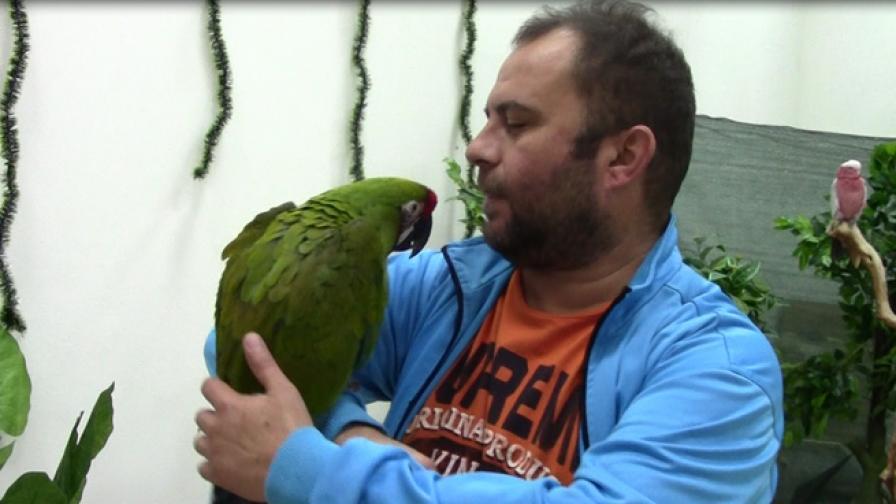 Най-екзотичните папагали са тук