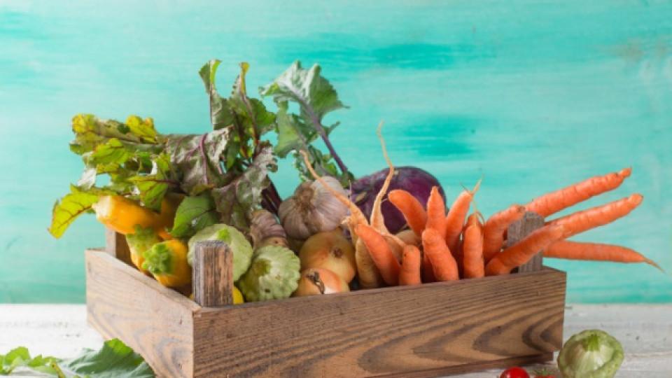 Очарованието на зимните салати - как да ги приготвим и какво трябва да знаем
