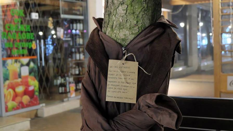 """За кого дърветата по бул. """"Витоша"""" бяха облечени"""