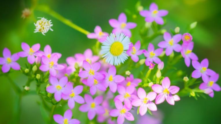 цвете бах
