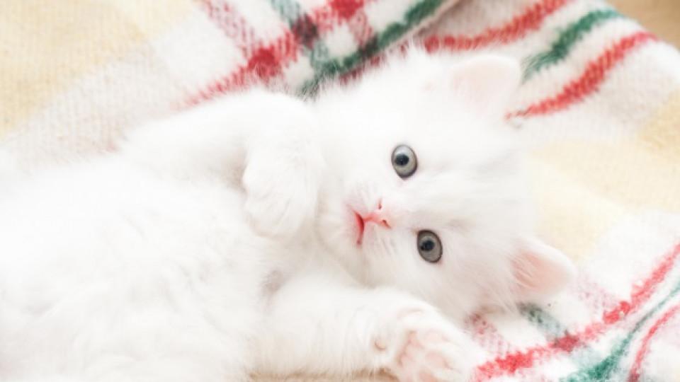 Палаво котенце