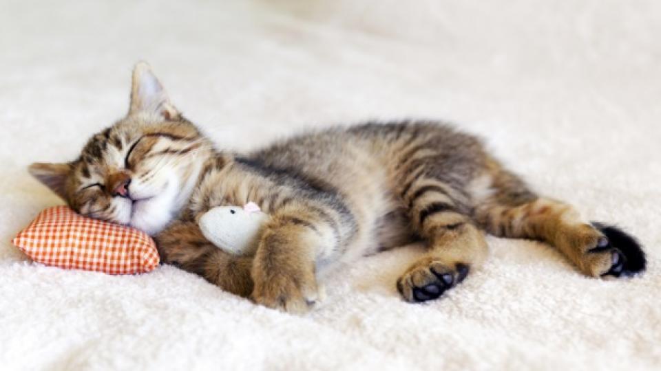 Котенце с апетит