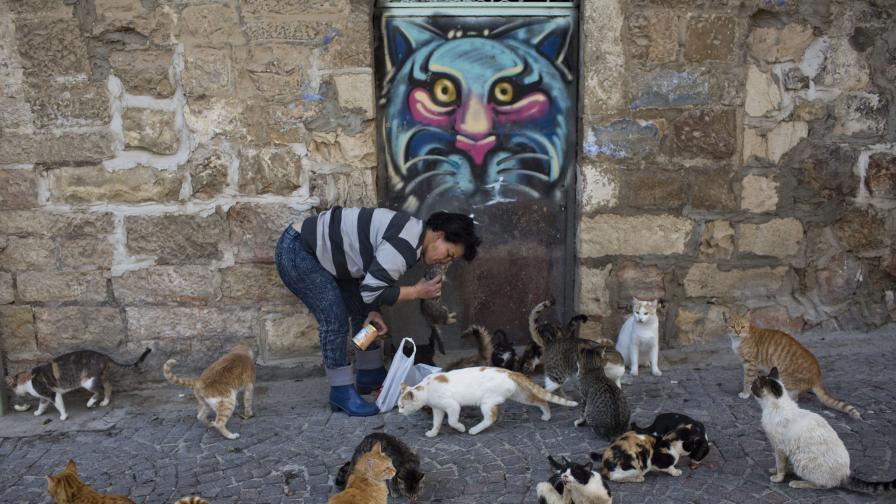 Тайната на интернет котките