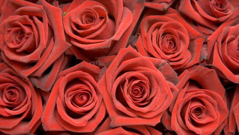 свети валентин любов рози сърца