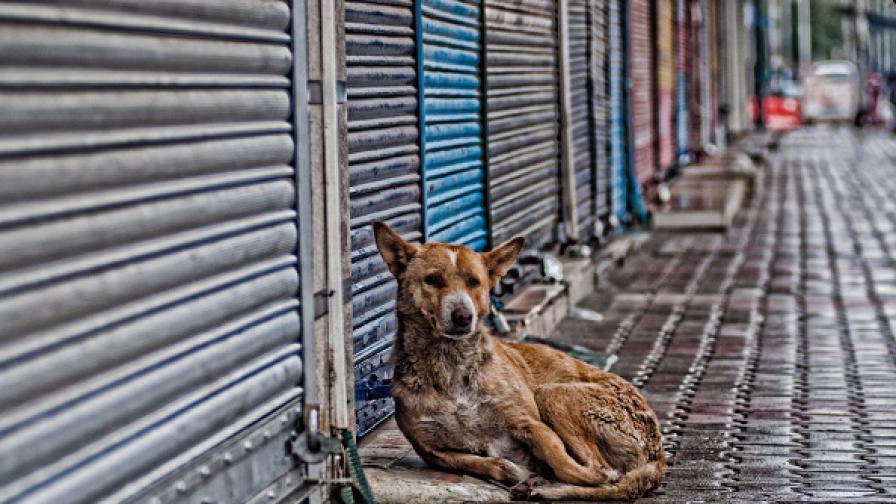 3844 са бездомните кучета в столицата
