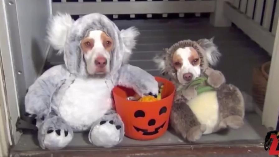 И животните обичат да се маскират (видео)