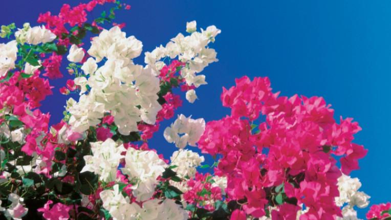 пролет небе цветя