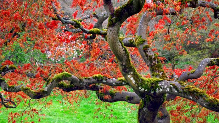 дърво пролет