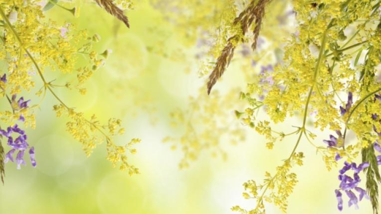 цветя пролет