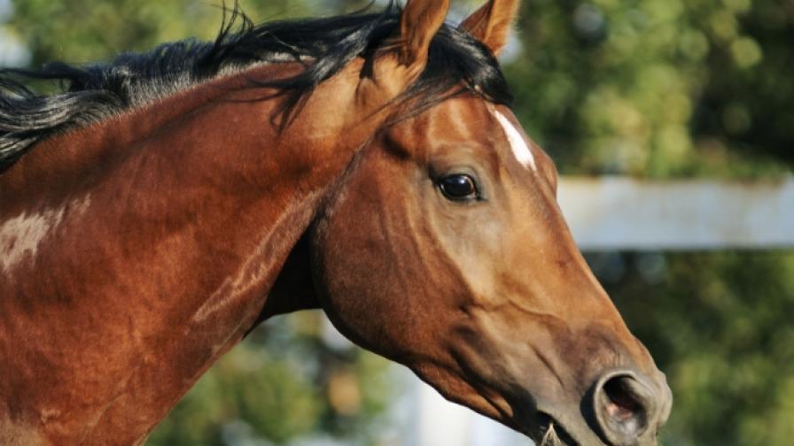 Вижте най-официалния кон в света
