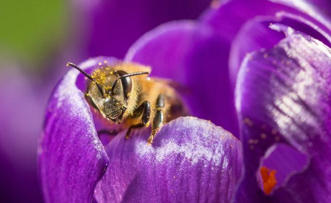 Мъж тества къде боли най-много ужилването от пчели