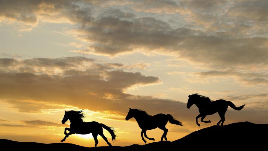 На Земята вече няма диви коне