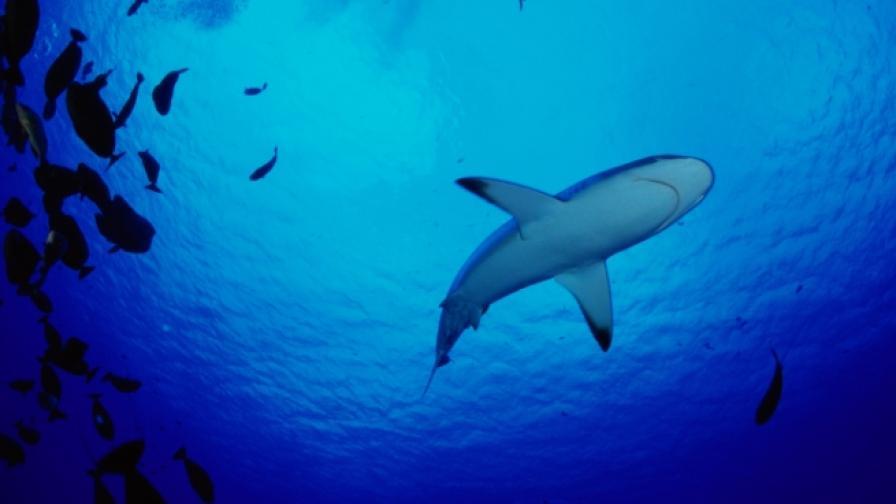 Да нощуваш сред акулите в Париж (снимки)