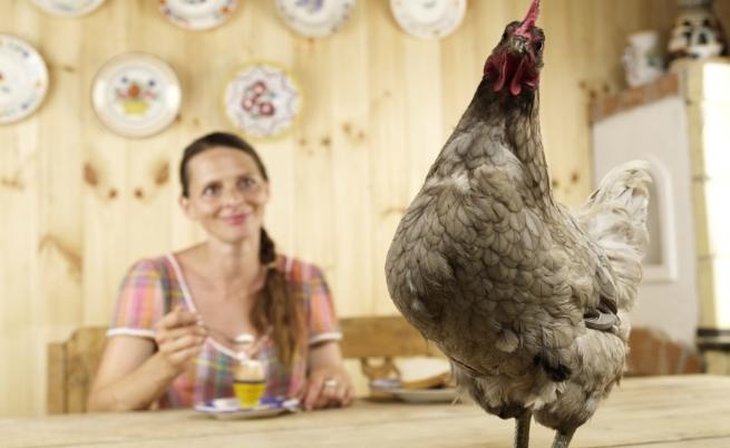 Тайните за красота на една истинска кокошка