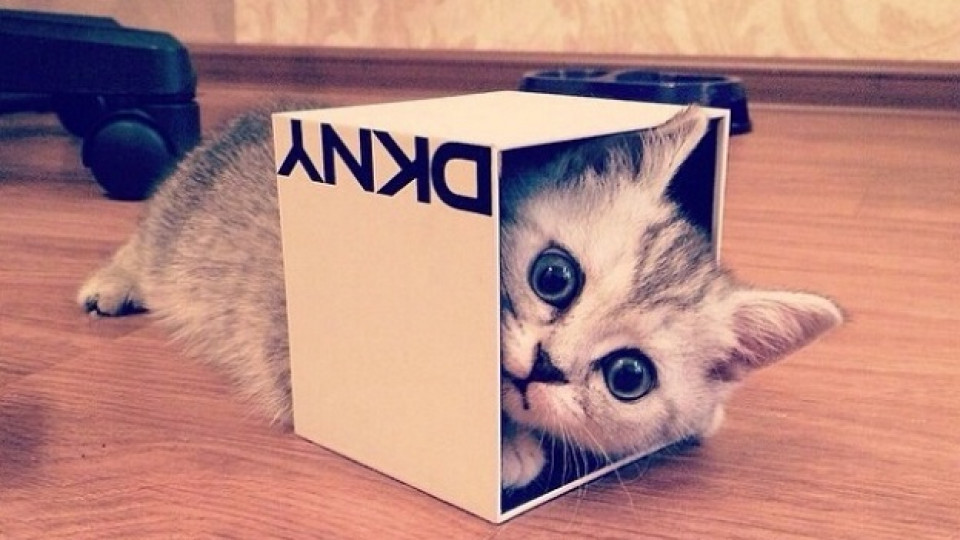 Котките и кутиите: мистерията е разкрита