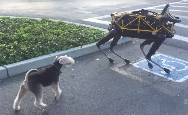 Приятелство между робот и куче – мисия невъзможна (видео)